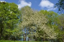 okolí na jaře