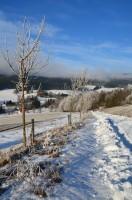 Stará celní cesta – v zimě běžkařská